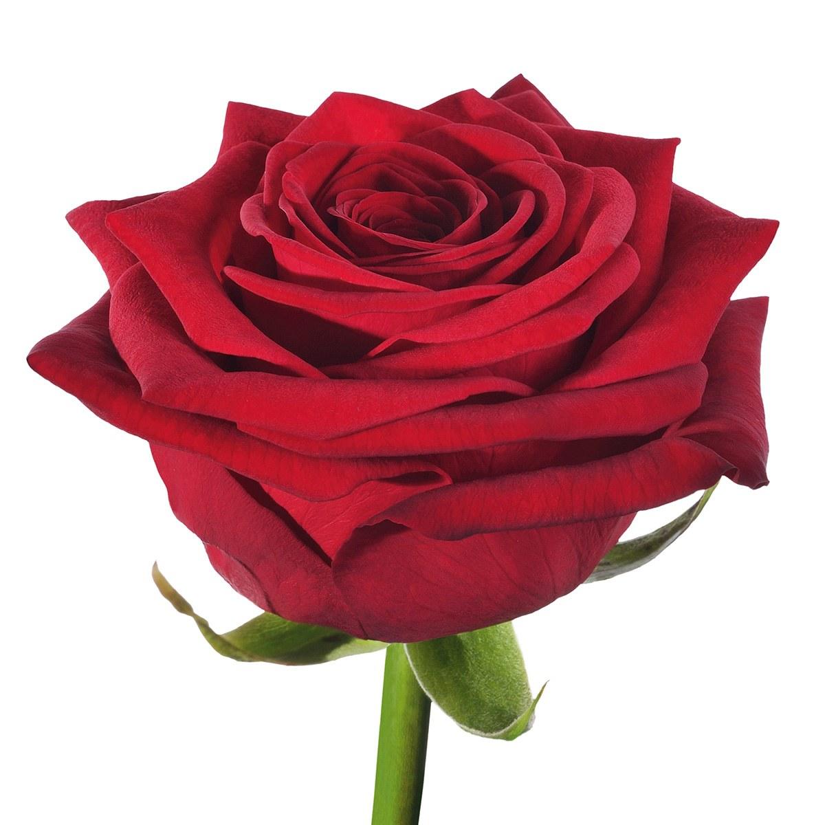 red-naomi-rose